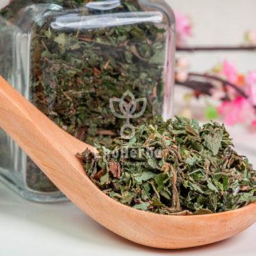 podagrycznik-ziele-watermarked